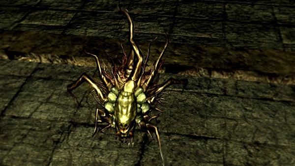 Chaos Bug - Dark Souls Wiki