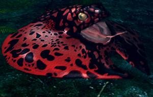 Frog-Ray