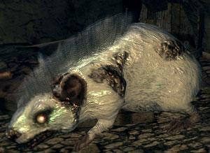 Snow Rat